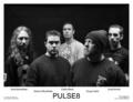 Portrait of Pulse8