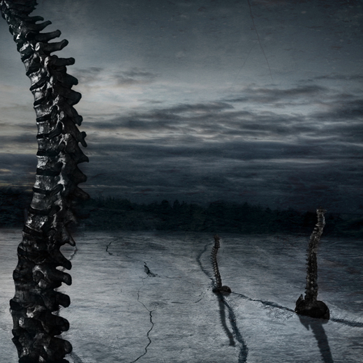 Untitled image for Fractured Spine
