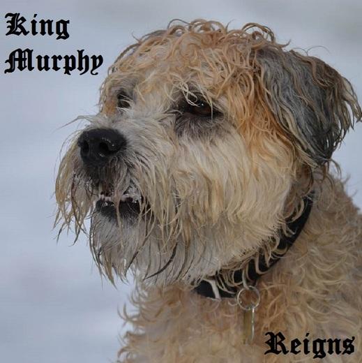 Portrait of King Murphy