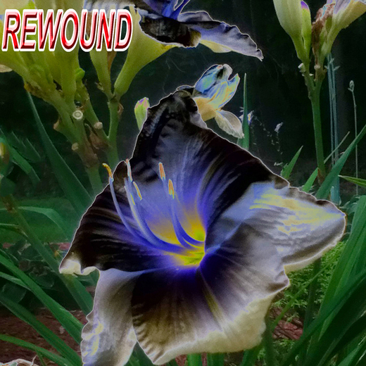 Portrait of ReWound