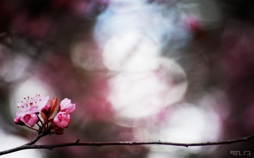Untitled image for Dj SLum