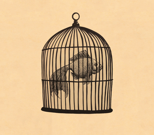 Portrait of Fish in a Birdcage