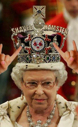 Untitled image for Shaved Hamster