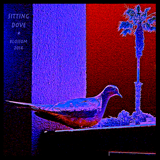 Portrait of Sitting Dove