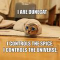 Portrait of DJ Dunecat