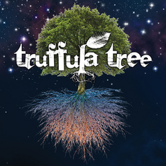 Portrait of Truffula Tree