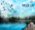 Portrait of Wilde Life