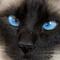 Portrait of cat1970