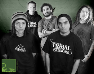 Portrait of Tribal Seeds