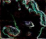 Portrait for Nocturnum