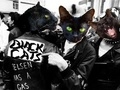 Portrait of Black Cats