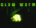 Portrait of Glow Worm